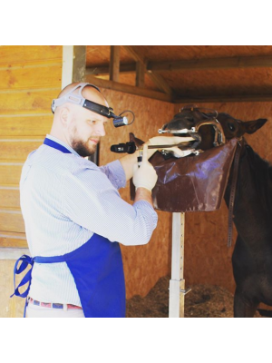 Equine Dental Endoscope